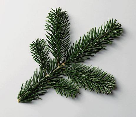 Tree-1_custom